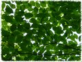 Leaves of a Dogwood Tree Royalty Free Stock Photo