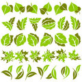 Leaves. Elements for design. Stock Image
