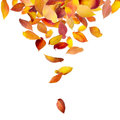 Leaves falling from above Royalty Free Stock Photography