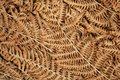 Leaves of fern on background. Texture of autumn leaf of the forest plant. Environmental concept Royalty Free Stock Photo