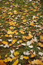 Leaves on the floor Royalty Free Stock Images