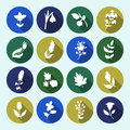 Leaves and flowers icons set.