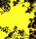 Leaves framed background
