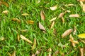 Leaves on green grass Royalty Free Stock Photography