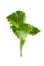 Leaves of a green salad Royalty Free Stock Photo