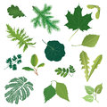 Leaves icon set summer nature decor isolated Royalty Free Stock Photos