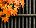 Leaves and iron bars orange artificial bar fence Stock Photo