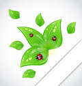 Leaves with ladybugs sticking out of the cut paper Royalty Free Stock Images