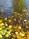 Leaves on lake water Royalty Free Stock Photo