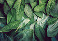 Organic plant leaf background macro.