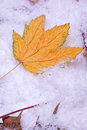 Leaves lying on snow Royalty Free Stock Photography