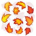 Leaves of maple set beautiful autumn on white background vector illustration Royalty Free Stock Image
