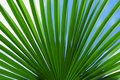 The leaves of palm tree Stock Photos