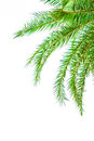 Leaves of palm tree isolated on white background Royalty Free Stock Photography