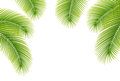 Leaves of palm tree on white background. Stock Photo
