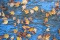 leaves and peeling paint