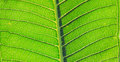 Leaves of plant green the Stock Image