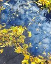 Leaves in a puddle Royalty Free Stock Photo