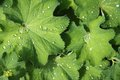 Leaves and raindrops Royalty Free Stock Photo