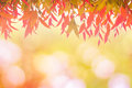 Leaves red In spring or Beautiful in blurred nature over sunset