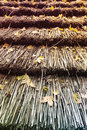 Leaves on Reed Roof Royalty Free Stock Photo