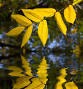 Leaves reflection Royalty Free Stock Photos