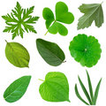 Leaves Set Royalty Free Stock Photography