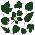 Leaves silhouettes Royalty Free Stock Photo