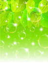 Leaves sky background soap bubble Royalty Free Stock Photography