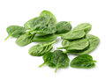 Leaves of spinach Royalty Free Stock Photos