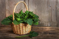 Leaves of spinach a wicker basket with a handle full fresh over wooden background Royalty Free Stock Image