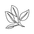 Leaves or sprout icon image