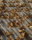 Leaves on steps symbolizing end of autumn Royalty Free Stock Photo