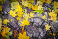 Leaves on the stone Royalty Free Stock Photo