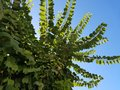 Leaves in the Sunlight Under a Blue Sky Royalty Free Stock Photo