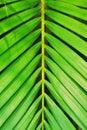 Leaves In Symmetry