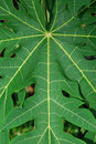 Leaves In Symmetry Royalty Free Stock Photo