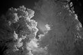 Leaves of tree in infrared light in nordhorn germany Royalty Free Stock Photos
