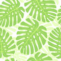 Leaves of tropical plant - Monstera. Seamless. Royalty Free Stock Images