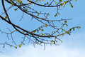 Leaves and twigs on a blue sky Royalty Free Stock Photography