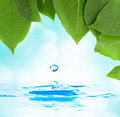 Leaves with water droplet over water reflection Royalty Free Stock Photo