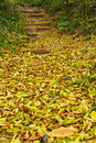Leaves with  Winding road Stock Images