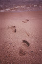Leaving footprints in the sand in the sea Royalty Free Stock Photo