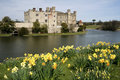 Leeds castle gardens spring daffodils kent uk Royalty Free Stock Photo