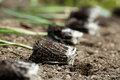Leek seedlings lying on freshly ploughed garden bed Royalty Free Stock Photo