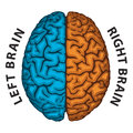 Left brain right brain and human hemispheres Royalty Free Stock Photo