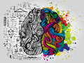 Left and right human brain. Creative half and logic half of human mind. Vector illustration.