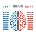 Left And Right Human Brain Vec...