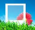 Lege foto met bloem Stock Foto's