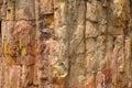 Legno fossile Fotografia Stock Libera da Diritti